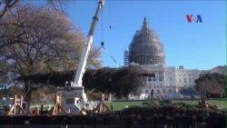 Cây Giáng Sinh ở Quốc hội thắp sáng mùa lễ cuối năm