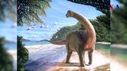 Misirdə yeni dinozavr növü tapılıb