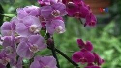 Dự án cứu hoa lan có nguy cơ tuyệt chủng tại Florida