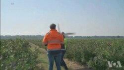 科技新闻:用机器鸟驱赶飞鸟 护卫航班飞行安全