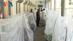 Swat Dengue Report