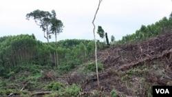 Mulai tahun 2011, program moratorium penebangan hutan dimulai.