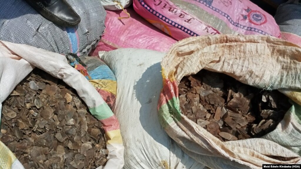 Pangolin scales seized in Douala, March 19, 2019. International trade in pangolins was banned in 2016 under the Convention on the International Trade in Endangered Species (CITES). But the trade continues.