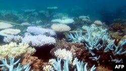 រូបភាពដែលមិនមានកាលបរិច្ឆេទមួយបង្ហាញពីការសឹកថ្មប៉ប្រះទឹកនៅក្នុងតំបន់ថ្មប៉ប្រះទឹក Great Barrier Reef ក្នុងប្រទេសអូស្ត្រាលី។