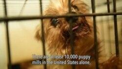 Ending Puppy Mills
