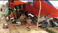 میانمار میں روہنگیا مسلمانوں کی نسل کشی کی تصدیق
