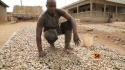 Ivory Coast Cashew Nut Noom