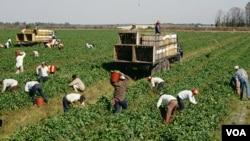 Miles de inmigrantes siguen llegando a Estados Unidos en busca de trabajo, apesar de la crisis que afecta al país.