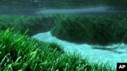 Khu cỏ biển