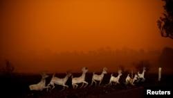 Vật trang trí Giáng Sinh chìm trong lửa tại Cobargo, New South Wales, Úc.