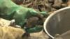 Mỹ thu hồi các loại sò của Nam Triều Tiên vì nghi nhiễm phân người