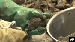 Gulf Oil Spill Shuts Down 50 Percent of Louisiana's Oyster Production