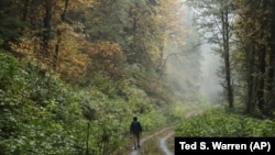 In this Oct. 23, 2018 photo, Dave Wiens, a biologist who works for the U.S. Geological Survey, walks through a forest near Corvallis, Oregon.