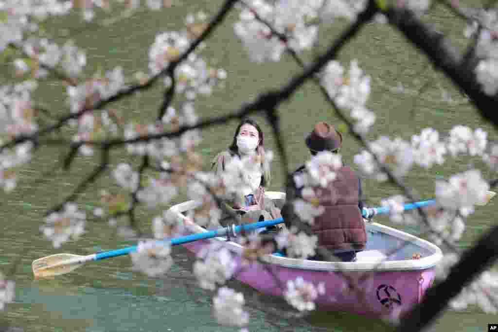 벚꽃이 핀 일본 도쿄에서 마스크를 쓴 주민들이 봄 정취를 즐기고 있다.