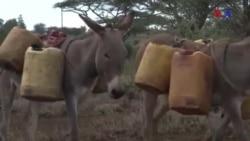 Quénia, água potável para comunidades rurais