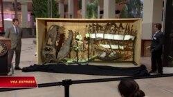 Mỹ: Sắp ra mắt bộ xương khủng long bạo chúa lớn nhất