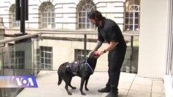 საიდუმლო სამსახურის ძაღლი, რომელმაც ობამა გადაარჩინა