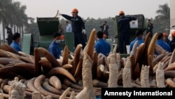 FILE - Workers destroy illegal ivory in Dongguan, southern Guangdong province, China, Jan. 6, 2014.