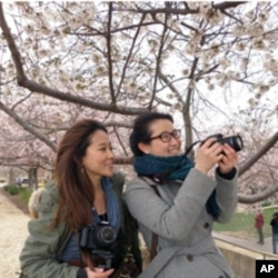 留学生Gillian Hu (左) 和Jaja来首都观赏樱花