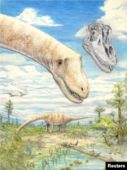 Two of the titanosaurian dinosaur species Sarmientosaurus musacchioi in their approximately 95 million-year-old habitat in southern Chubut Province, central Patagonia, Argentina, with a digital rendering of the skull in the same position as the head of the foreground individual, are seen in an undated artist's rendering. (Courtesy: Mark A. Klingler, Carnegie Museum of Natural History and WitmerLab, Ohio University)
