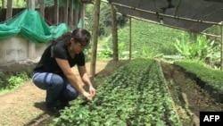 Shkencëtarët mbi ndikimin e ndryshimeve klimatike tek kulturat bujqësore