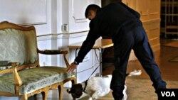 Polisi Swedia menggunakan anjing pelacak untuk memeriksa gedung parlemen.