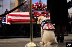 Sully, el perro guía del expresidente George H.W. Bush, presentó sus respetos al exmandatario en el Capitolio de EE.UU. Dic. 4 de 2018.