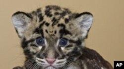 Centar za očuvanje bioloških vrsta Nacionalnog zoološkog vrta spašava životinje kojima prijeti odumiranje