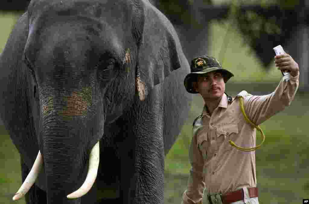 در هند این مامور جنگلبانی با یک فیل سلفی میگیرد.