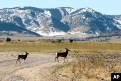 FILE - Deer cross a road stripped of its asphalt at the former Rocky Flats Nuclear Weapons plant near Golden, Colorado, Oct. 13, 2005.