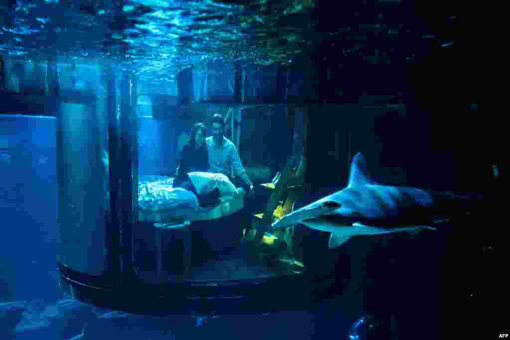 លោក Alister Shipman របស់ប្រទេសអង់គ្លេស និងលោកស្រី Hannah Simpson របស់ប្រទេសអៀវឡង់ខាងជើង ដែលអ្នកឈ្នះនៃការប្រកួតមួយស្ថិតនៅលើកន្លែងស្នាក់នៅ Airbnb មើលអាងត្រីឆ្លាម ពីបន្ទប់គេងក្រោមទឹកនៅអាងត្រី Aquarium de Paris ប្រទេសបារាំង កាលពីថ្ងៃទី១១ ខែមេសា ឆ្នាំ២០១៦។ អ្នកឈ្នះទាំងពីរនាក់នេះទទួលបានការស្នាក់នៅបន្ទប់គេងក្រោមទឹកមួយយប់ដោយឥតគិតថ្លៃ។