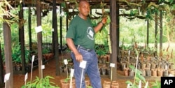 Cameroonian researcher surveys medicinal plants