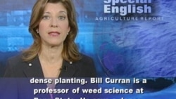 Ideas for Getting a Firm Grip on Weed Control