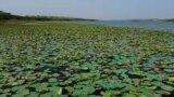 Achro Thar Lakes Thumbnail