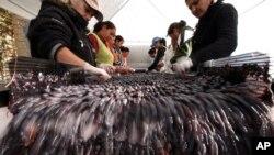 지난 2009년 불가리아 수도 소피아 외곽 지역의 포도주 공장에서 종업원들이 포도를 선별하고 있다. (자료사진)