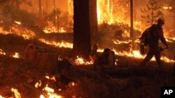 A firefighter walks through an burning area near Yosemite National Park in California.