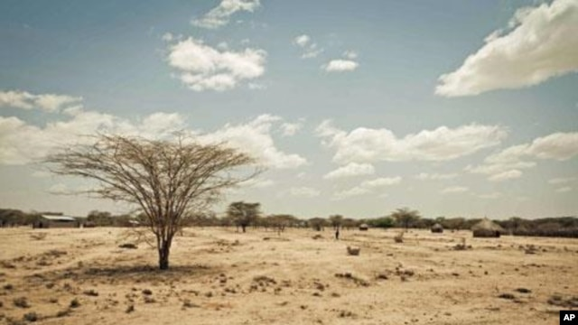 Effects of severe drought are visible throughout the Horn of Africa (file photo).