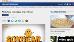 2018年7月20日,中國官方海外媒體CGTN發布了一段英文的動畫視頻《大豆的獨白》(Monologue of a Soy Bean),以一個卡通大豆的口吻講述美中貿易戰對美國農業州的影響。 (圖為CGTN網站截屏,時間2018年7月20日下午2點。)