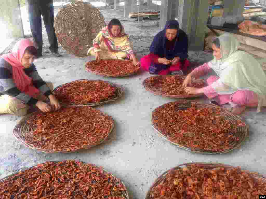 خواتین بھی خوبانیوں کو خشک کر کے منڈیوں تک پہنچانے کی سرگرمیوں میں مردوں کے شانہ بشانہ کام کرتی ہیں۔