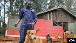 Chyen ki fèk resevwa vaksinasyon nan kad yon kanpay pou elimine maladi laraj nan Peyi Kenya. (Foto: Hilary Heuler/VOA News. 17 desanm 2014).