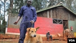 FILE - Dogs at Kenya's KSPCA, which deals regularly with cases of rabies, get checked under a vaccination initiative. (H. Heuler/VOA News)