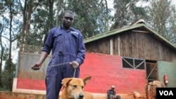 Kenya's new vaccination initiative aims to eliminate rabies in dogs. The Kenya Society for the Protection and Care of Animals, which has a facility in Nairobi, hopes it prevents culling the animals to halt the disease. (Hilary Heuler / VOA News)