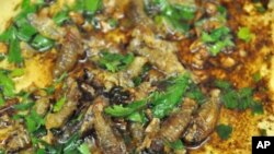 Cicadas sautéd with butter, oil and garlic. Garnished with parsley and lemon.