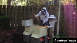 Beekeeper Marci LeFarve and her son tend to her backyard bee hives in Maryland. (Image courtesy of Marcie LeFarve)