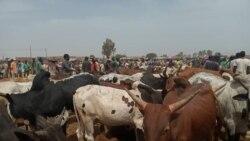 Les éleveurs camerounais fuient les séparatistes anglophones
