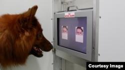 Một con chó đang xem gương mặt nào vui và gương mặt nào buồn