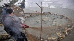 Fishermen at a fish farm in central Hungary in December. Hungary is rich in waterways, but traditionally most Hungarians eat fish only at Christmastime.