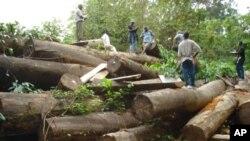 Liberia timber
