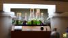 Các kỹ sư biến tảo thành 'dầu thô sinh học'