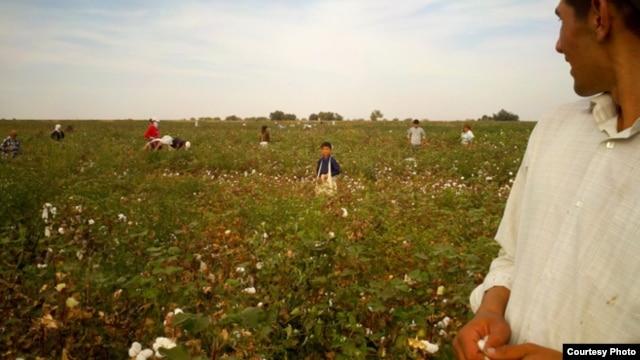 Jizzax viloyati, Komil tumani, 25-sentabr, 2012 (Manba: Uzbek-German Forum for Human Rights)